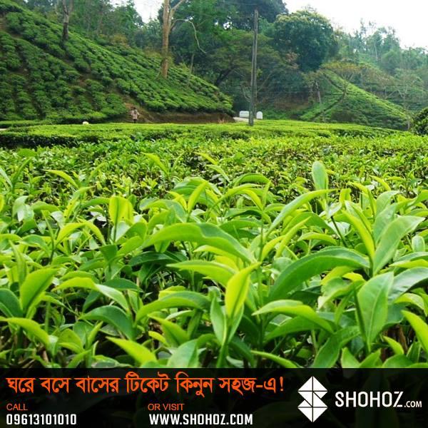 Srimongal – The Tea Capital of Bangladesh