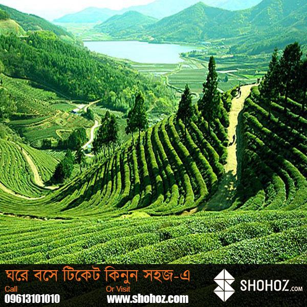 Sylhet -The tea granary of Bangladesh